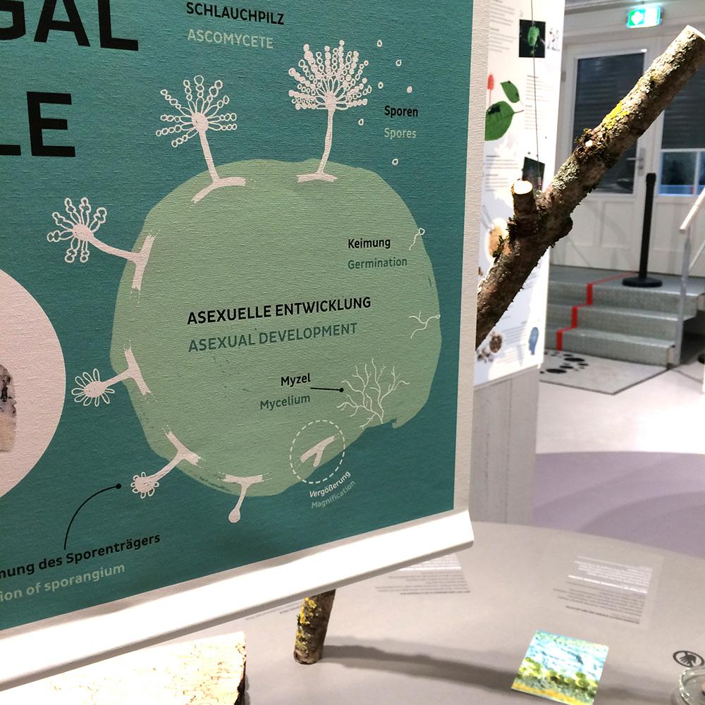 """Ausstellung """"Pilze"""" im Biotopia Lab München"""