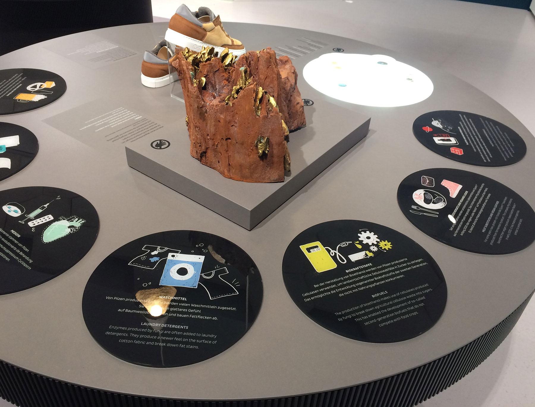 """Detail Ausstellung """"Pilze"""" im Biotopia Lab München"""