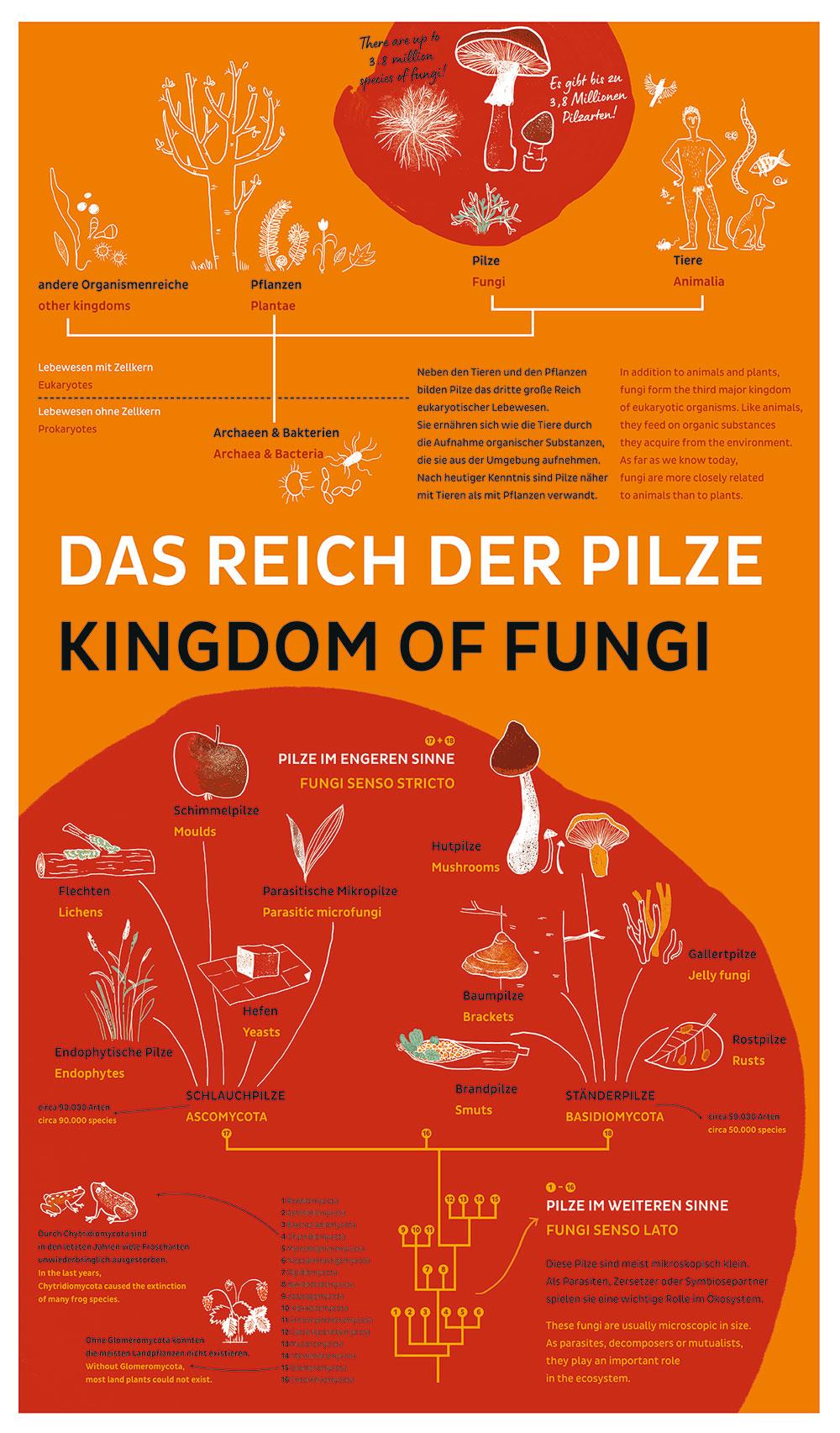 Poster Reich der Pilze